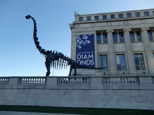 The Field Museum is known as a good place to visit dinosaurs. All photos by Jodie Jacobs
