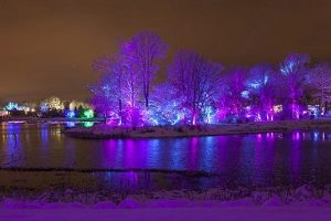 Trees glow and lights move to music at the Morton Arboretum's Illumination festival. Morton Arboretum photo