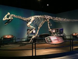 See a dinosaur that didn't exist outside of Antarctic in a new Field exhibit