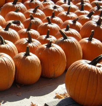 Pumpkins galore can be found at fun fall festivals right now. (J Jacobs photo)